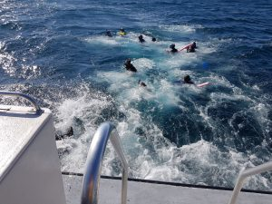 קפיצה מהירה למים לקראת מפגש