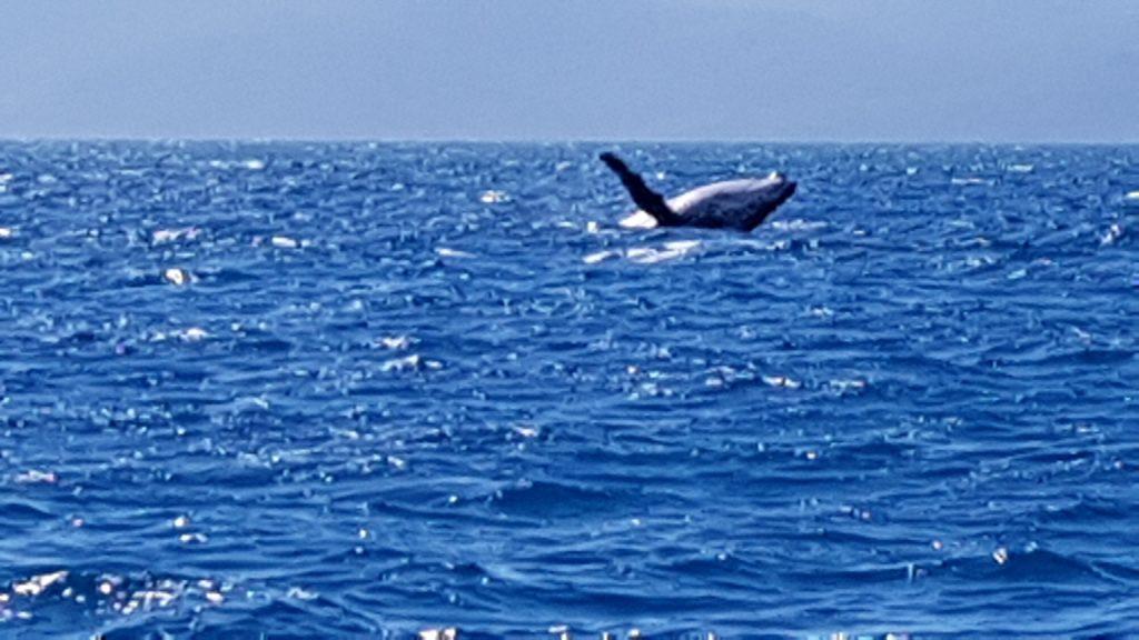 לוויתן בפוזה של.... צלמו אותי