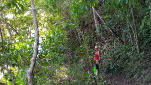 משוטטים בג'ונגל